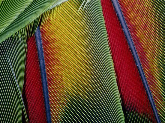 dlaczego-papugi-na-pokadzie-eglarstwo-przesdy