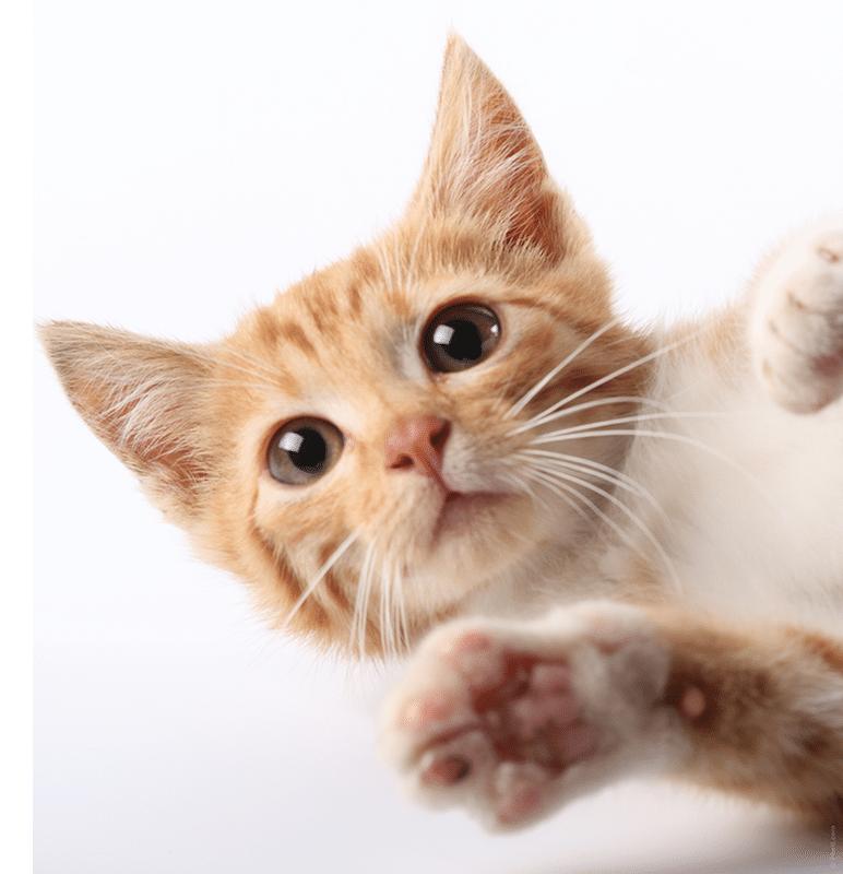 koty-przesdy-eglarskie-eglarstwo
